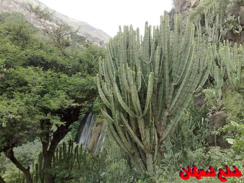 128013881014  رحلة مصورة الى اليمن السعيد 1431هـ ( تعز   اب   صنعاء )...