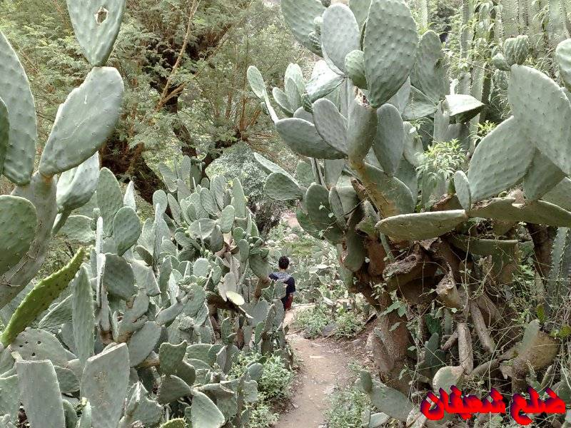 128013881015  رحلة مصورة الى اليمن السعيد 1431هـ ( تعز   اب   صنعاء )...