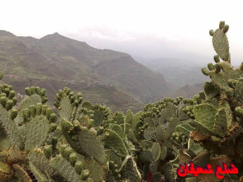 128014021912  رحلة مصورة الى اليمن السعيد 1431هـ ( تعز   اب   صنعاء )...