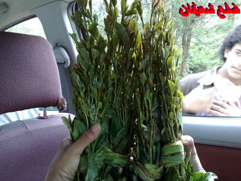 128014021914  رحلة مصورة الى اليمن السعيد 1431هـ ( تعز   اب   صنعاء )...