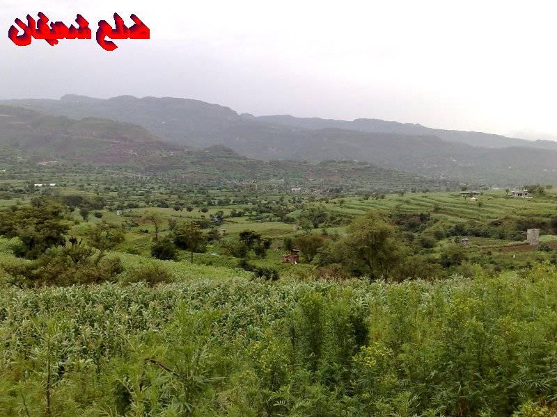 128014021915  رحلة مصورة الى اليمن السعيد 1431هـ ( تعز   اب   صنعاء )...