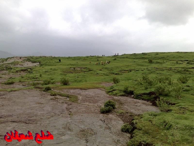 128014128516  رحلة مصورة الى اليمن السعيد 1431هـ ( تعز   اب   صنعاء )...
