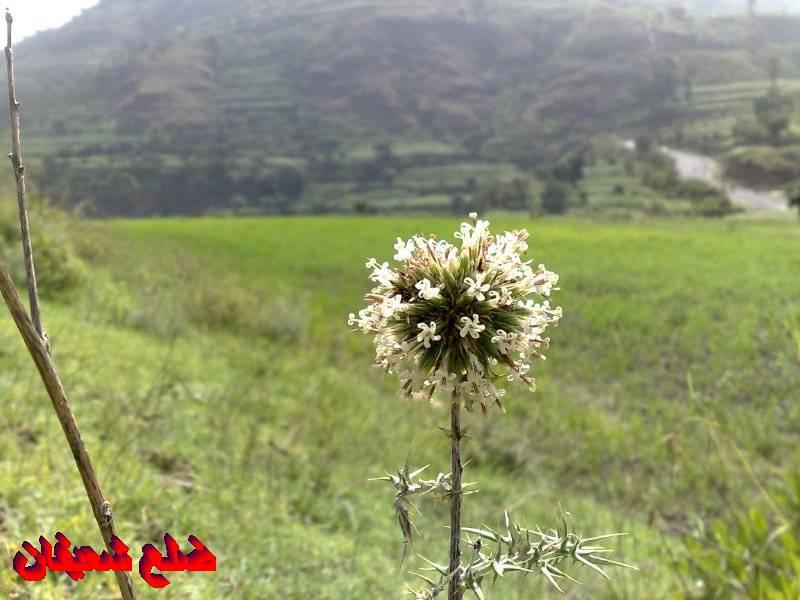 12801412856  رحلة مصورة الى اليمن السعيد 1431هـ ( تعز   اب   صنعاء )...