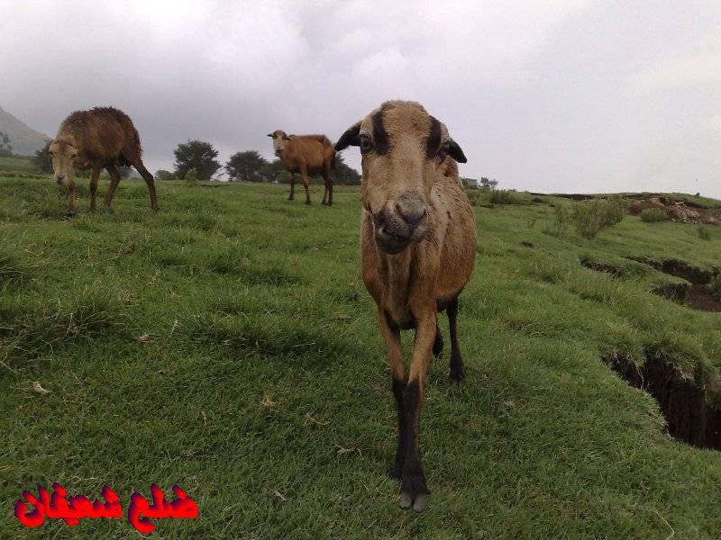 12801417924  رحلة مصورة الى اليمن السعيد 1431هـ ( تعز   اب   صنعاء )...