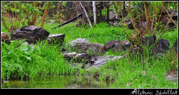 صور للربيع من بلاد زهران 129529447811.jpg