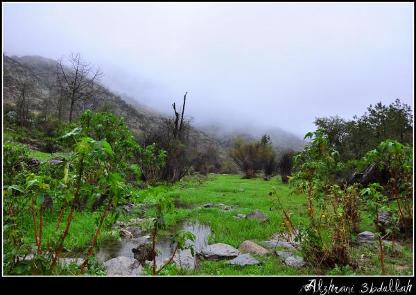 صور للربيع من بلاد زهران 129529447813.jpg