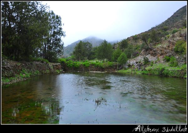صور للربيع من بلاد زهران 129529447815.jpg