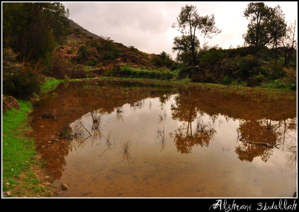 صور للربيع من بلاد زهران 12952944789.jpg