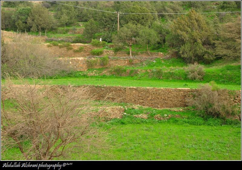 صور للربيع من بلاد زهران 12983122012.jpg