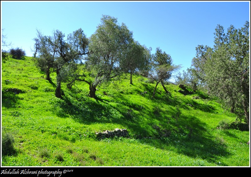 صور للربيع من بلاد زهران 12983122013.jpg