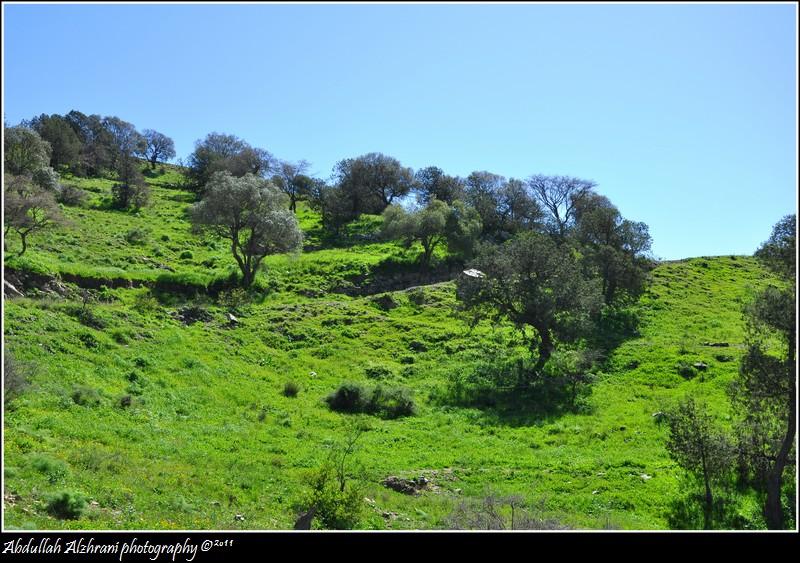 صور للربيع من بلاد زهران 12983122015.jpg