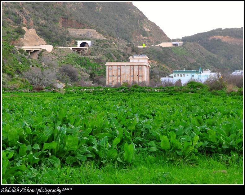صور للربيع من بلاد زهران 12983122017.jpg