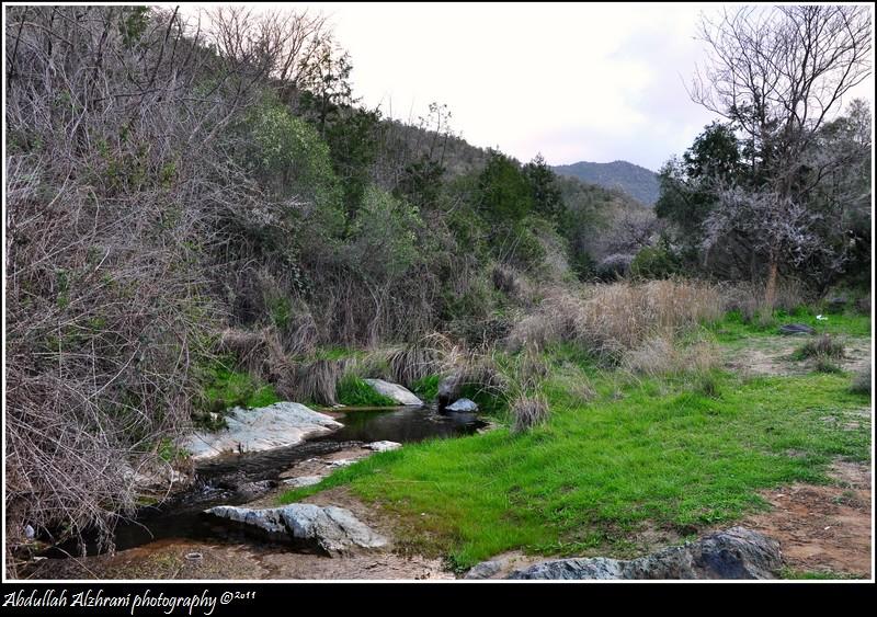 صور للربيع من بلاد زهران 12983122018.jpg