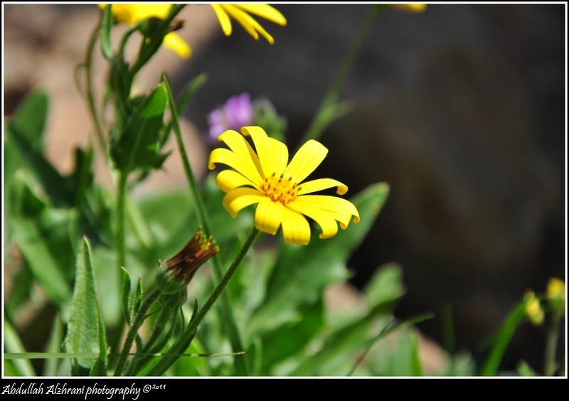 صور للربيع من بلاد زهران 12983122019.jpg