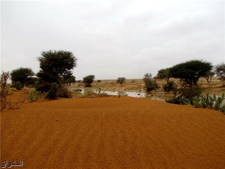 جولة صور( وطريق النكبة الرياض 13001741496.jpg