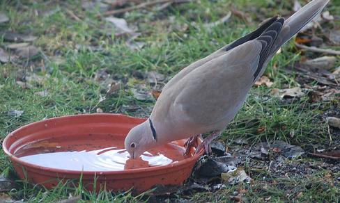 نظرة رحمة الطيور لهيب الصيف 13067717023.png