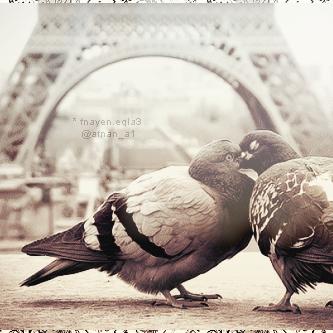 يآ طيور الشوق خذيني له تكفين ..  رمزيات 135876828910.png