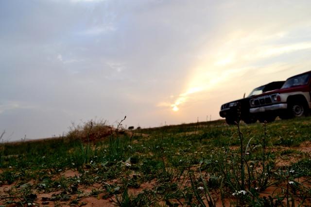 كافيار الصحراء : _