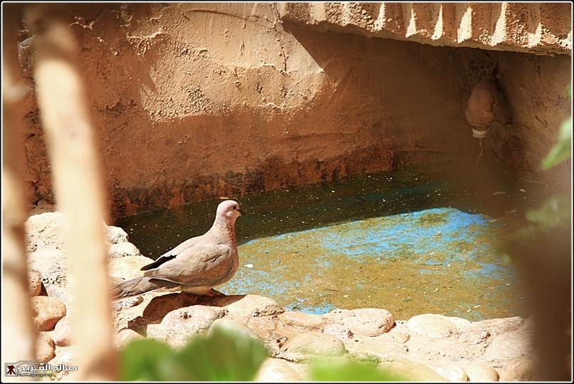حملة لاتنسو الطيور الماء 1436 14344812711.jpg