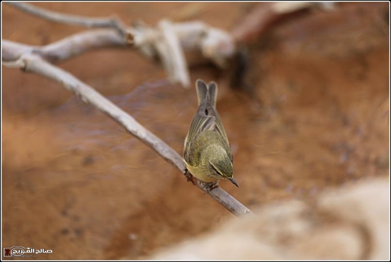 حملة لاتنسو الطيور الماء 1436 14344812714.jpg