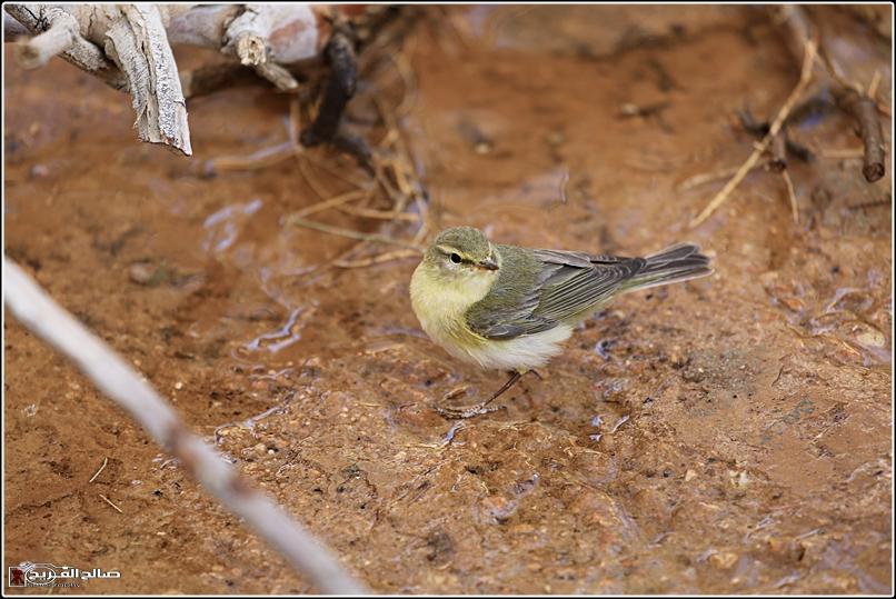 حملة لاتنسو الطيور الماء 1436 14344812716.jpg