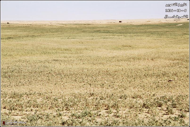 فياض خضراء صيفية صحاري رفحاء 14375975712.jpg