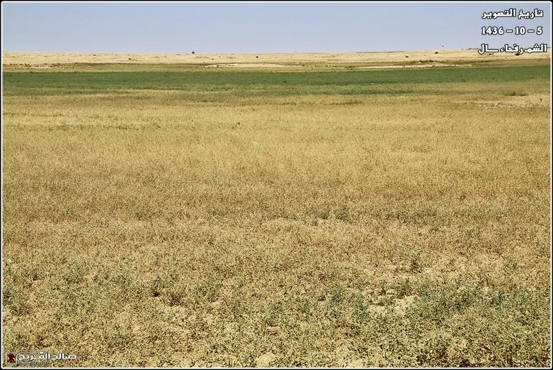 فياض خضراء صيفية صحاري رفحاء 14375975718.jpg