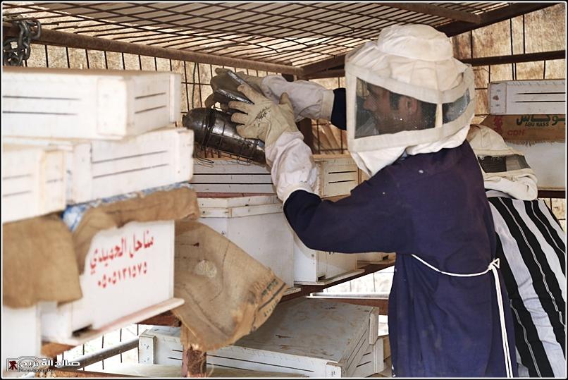 طريقة النحل صحاري رفحاء 1437 144528826510.jpg