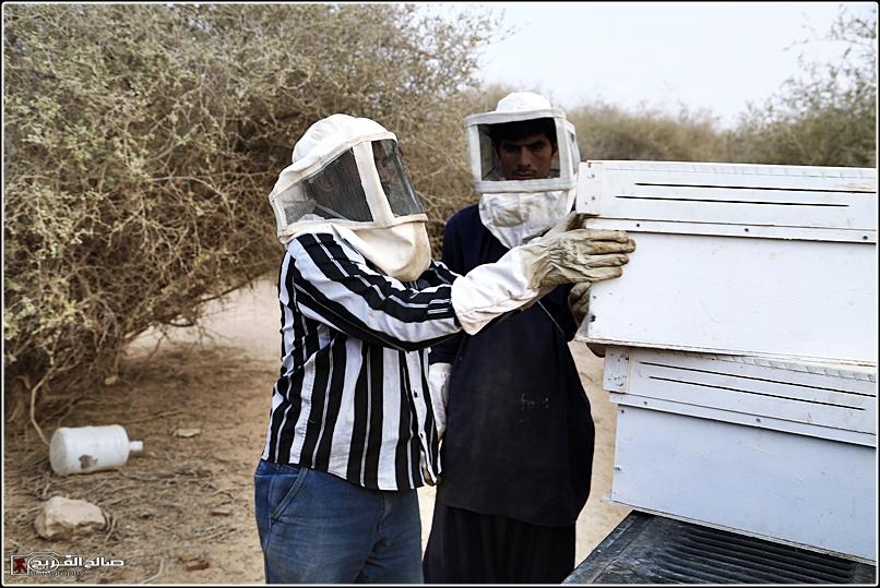 طريقة النحل صحاري رفحاء 1437 14452882653.jpg