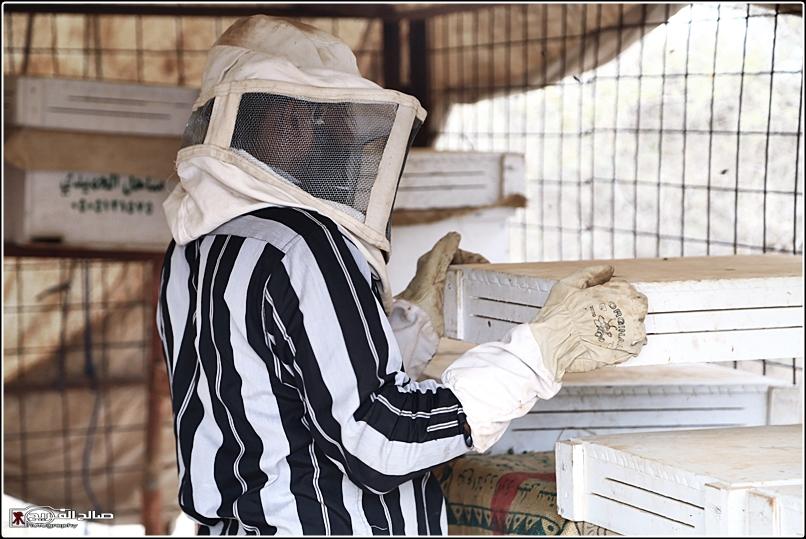 طريقة النحل صحاري رفحاء 1437 14452882655.jpg
